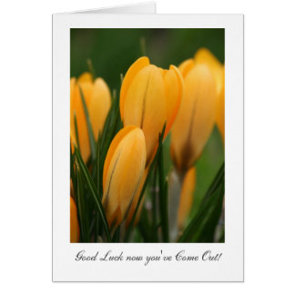 Golden Spring Crocuses - Luck now you've Come Out Greeting Card