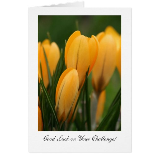 Golden Spring Crocuses - Luck on Your Challenge Cards