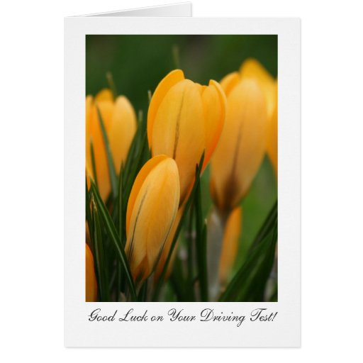 Golden Spring Crocuses - Luck on Your Driving Test Greeting Cards