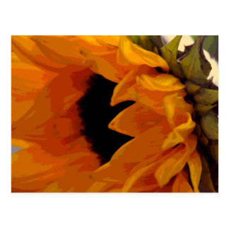 Golden Sunflower Postcard