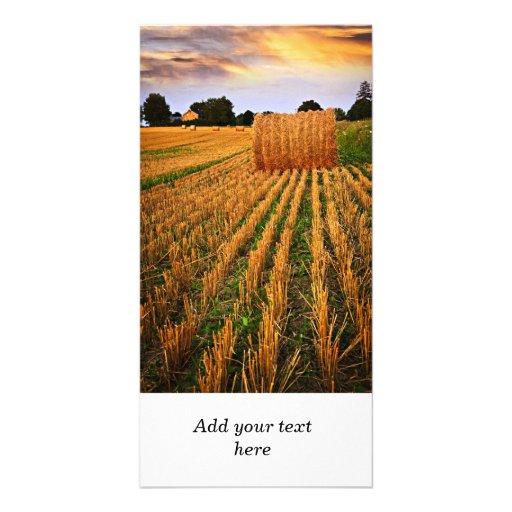 Golden sunset over farm field custom photo card