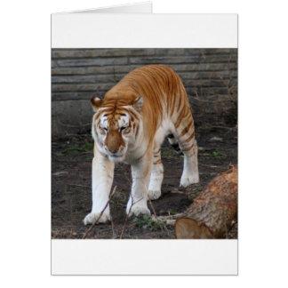 Golden Tabby Tiger 1 Greeting Card