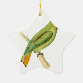 Golden-tailed Parrot Bird Illustration by William Ceramic Star Decoration