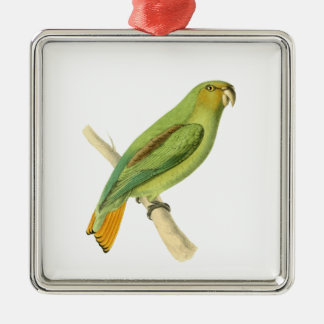 Golden-tailed Parrot Bird Illustration by William Silver-Colored Square Decoration