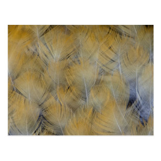 Golden Thrush Feather Abstract Postcard