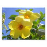 Golden Trumpet Flowers I Photo Art