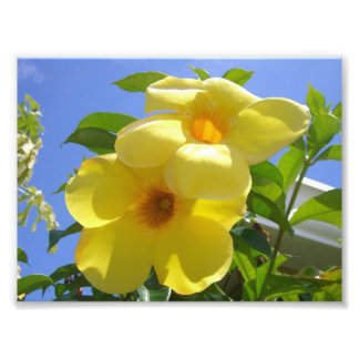 Golden Trumpet Flowers I Photo Print
