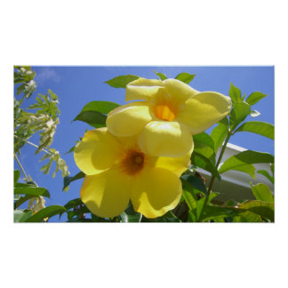 Golden Trumpet Flowers I Poster
