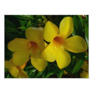 Golden Trumpet Flowers II Tropical Floral Art Photo