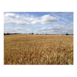 Golden Wheat Field Postcard
