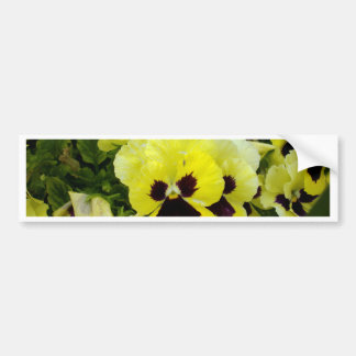 Golden Yellow Pansies On Bush, Bumper Sticker