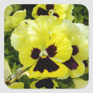 Golden_Yellow_Pansies,_ Square Sticker