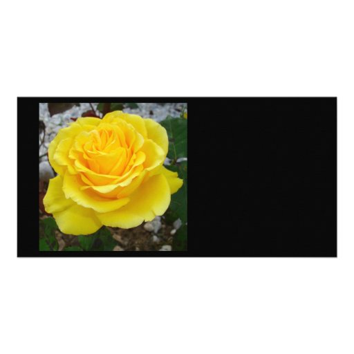 Golden Yellow Rose with Garden Background Personalized Photo Card