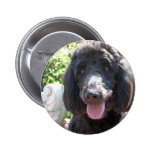 GoldenDoodle Abby 1 6 Cm Round Badge