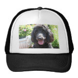 GoldenDoodle Abby 1 Cap