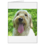 Goldendoodle Products Cards