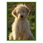 Goldendoodle Puppy Dog Blank Greeting Postcard