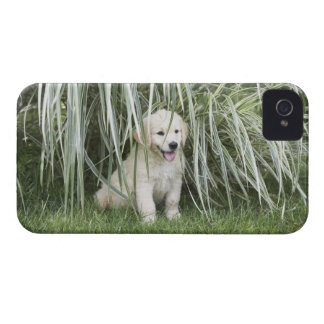 Goldendoodle puppy sitting under tall grasses iPhone 4 Case-Mate cases