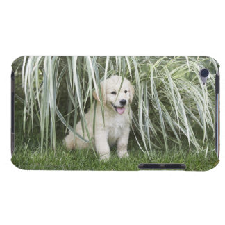 Goldendoodle puppy sitting under tall grasses iPod touch cover