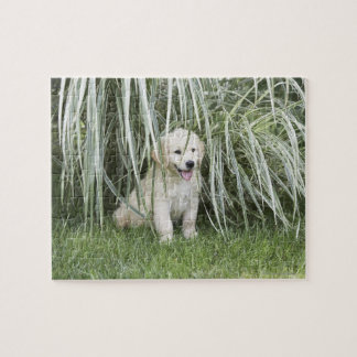 Goldendoodle puppy sitting under tall grasses puzzle