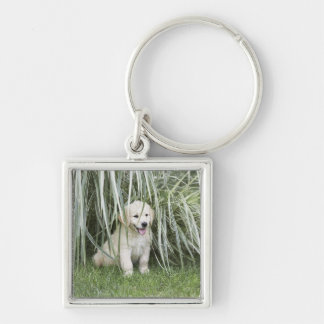 Goldendoodle puppy sitting under tall grasses Silver-Colored square key ring