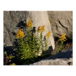 Goldenrod And Shadows Nature Poster Print
