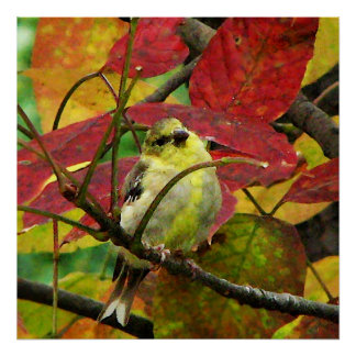 Goldfinch and Autumn Leaves Poster