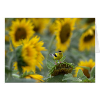 Goldfinch and Sunflowers - Blank Card