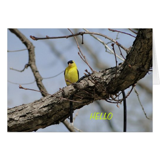 Goldfinch, Bright and Joyful Card