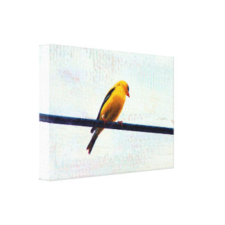 Goldfinch Stretched Canvas Print