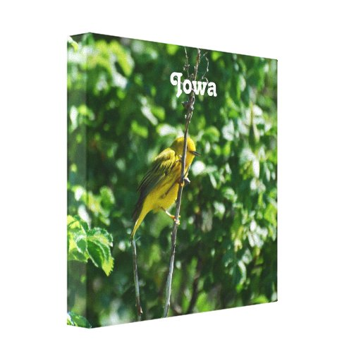 Goldfinch Stretched Canvas Prints