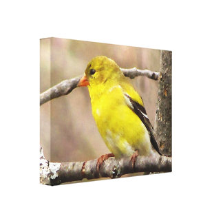 Goldfinch Gallery Wrapped Canvas