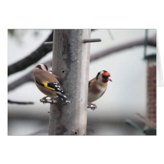Goldfinch Card