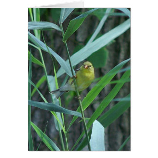 Goldfinch, Greeting Card. Card