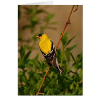 Goldfinch on branch card