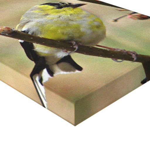 Goldfinch on Stretched canvas Stretched Canvas Print