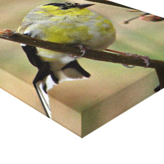 Goldfinch on Stretched canvas Gallery Wrap Canvas