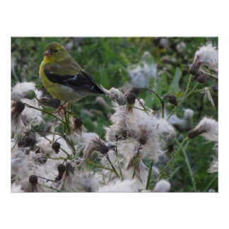 Goldfinch on Thistle Print