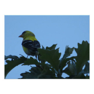Goldfinch on Tree Print