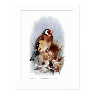 Goldfinch Postcard