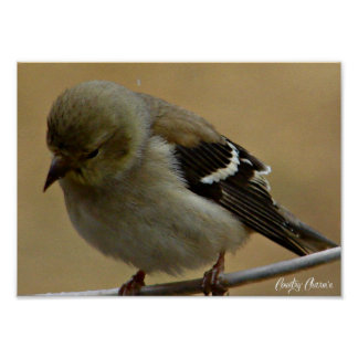 Goldfinch Poster by Country Charm'n