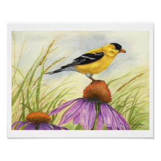 Goldfinch - Print