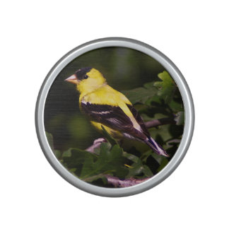 Goldfinch speaker