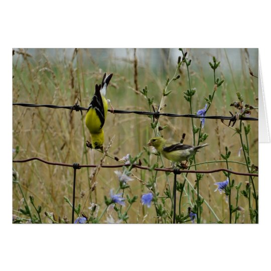 Goldfinches & Wire Fence Card