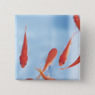 Goldfish 2 15 cm square badge