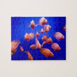 Goldfish 2 jigsaw puzzle