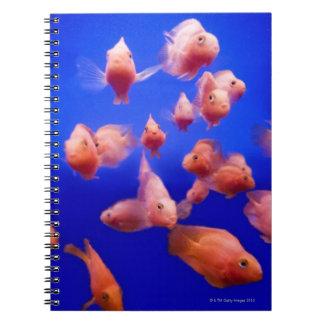 Goldfish 2 notebooks