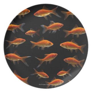 Goldfish 2 plate