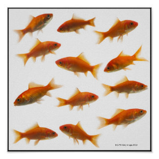 Goldfish 2 poster