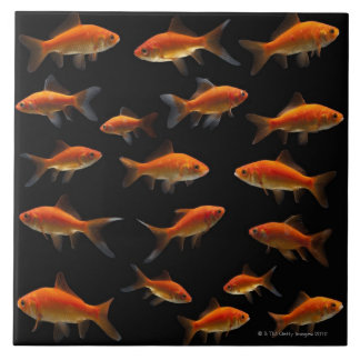 Goldfish 2 tile